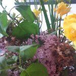 Cum mentin florile taiate cat mai mult timp